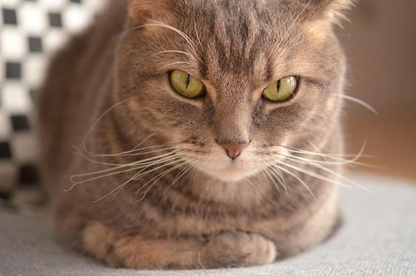 猫の年齢がわからないときの確かめ方、その7つのポイント