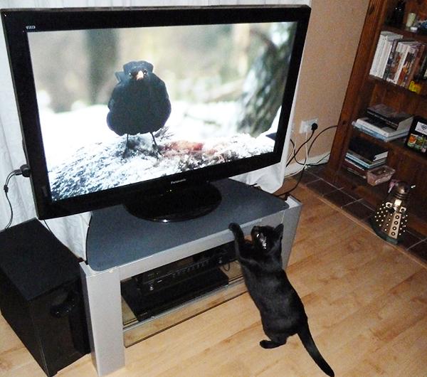 猫の困った行動をなんとかしたい!解決する3つのしつけ方