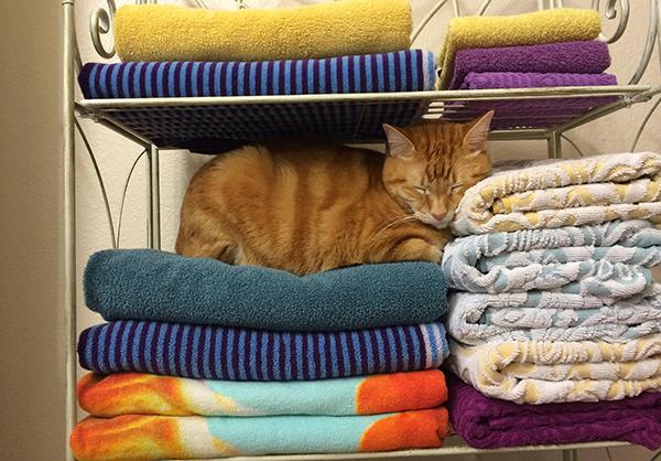 猫の保険、入ってる?かしこい選び方とオススメ5種を紹介