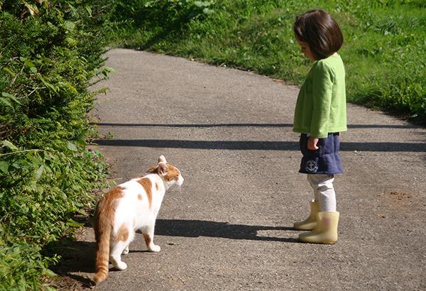 飼い主必見!猫とお散歩するときの注意点