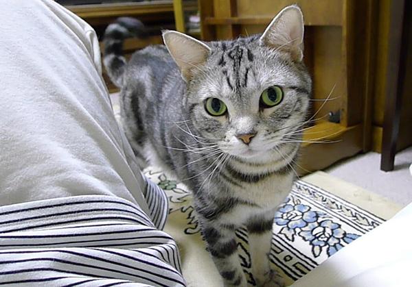 猫の里親になって一緒にしあわせに暮らすために必要なこと