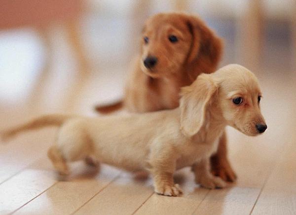 ペットを買いたい!犬好きな人にオススメ飼いやすい6種