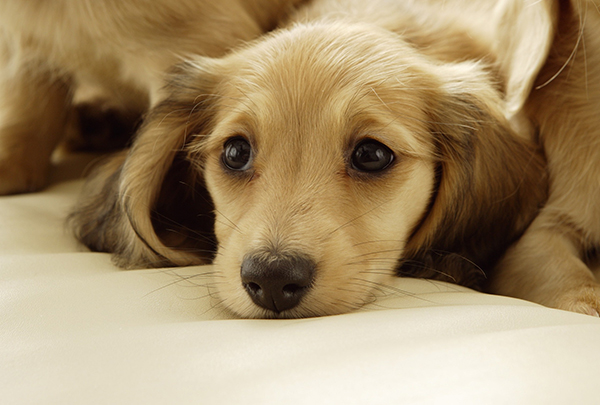 里親会で子犬を探すなら☆引き受ける時に注意するポイント