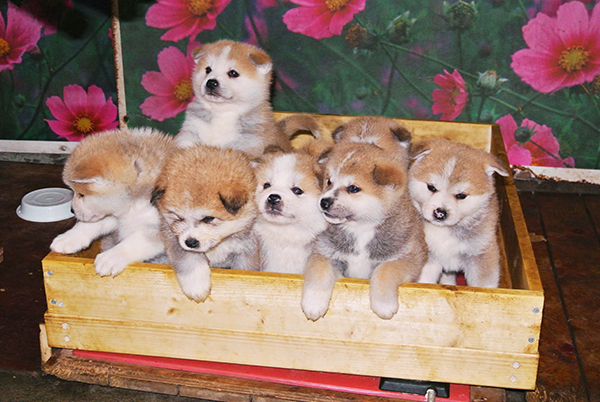 犬の里親になりたい!大切に迎えるための5つの準備