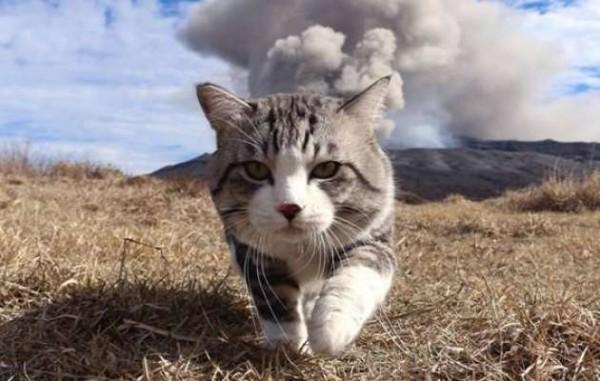 猫の病気の原因を知って早く気付くための7つの注意事項