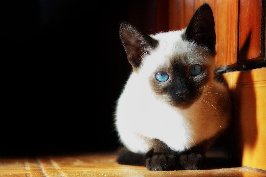 猫の年齢別☆与えてあげたいキャットフードの種類