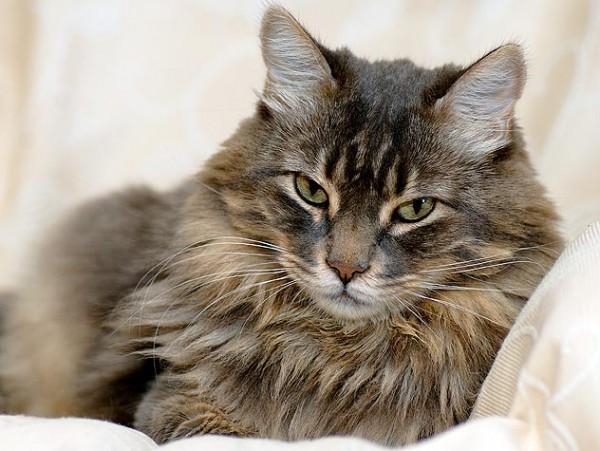 猫が病気にかからないためにする7つの予防策