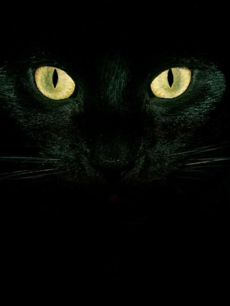 神秘的な黒猫の目