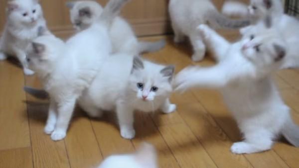 子猫がいっぱい!