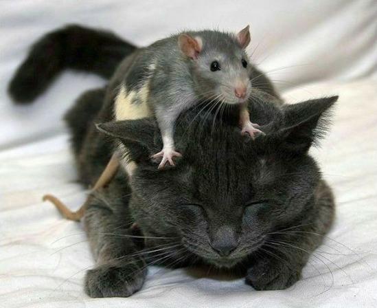 ネコ科の動物がこんなにもかわいい11の画像