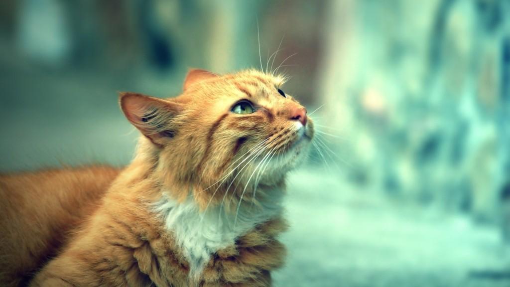 トラ猫好きなら絶対見てほしい11画像★