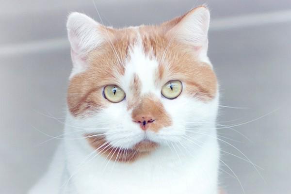 可愛い猫画像を撮る時に押さえておきたいポイント★
