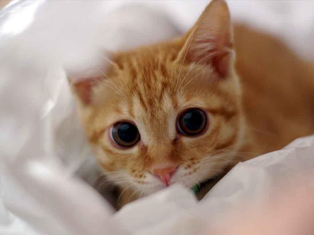 猫の目の病気、知らなかったあんなこと★こんなこと