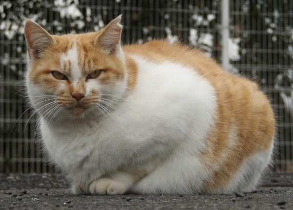 猫の性格を知って愛猫と楽しく生活する5つの極意