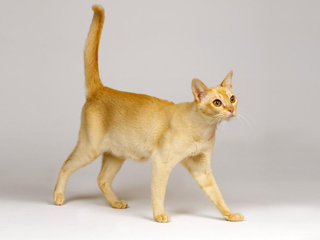 猫の性格はこんなところで分かる!診断の仕方