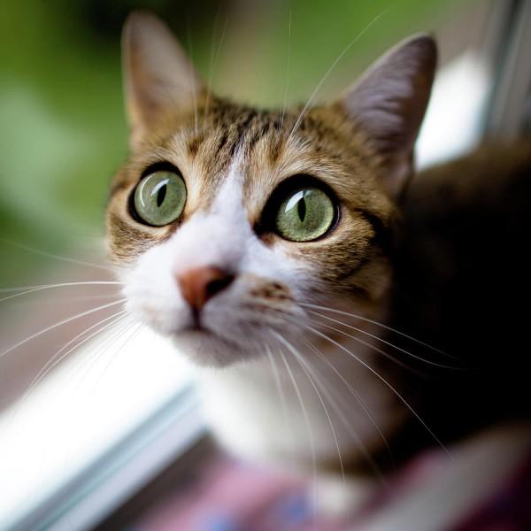 びっくり猫の目