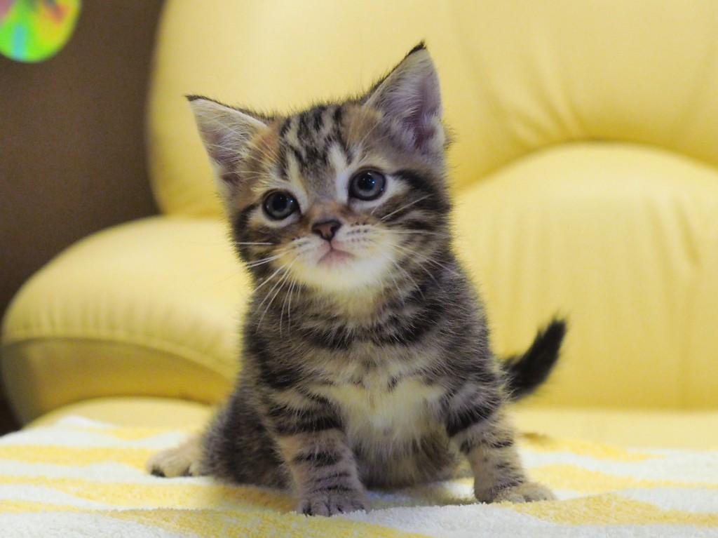 子猫の画像。沢山種類集めてみました。ドキュン画像大放出