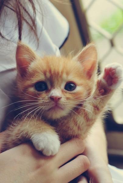 挨拶する子猫