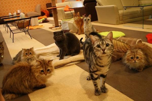 猫カフェに行くなら池袋がおすすめな5つの理由