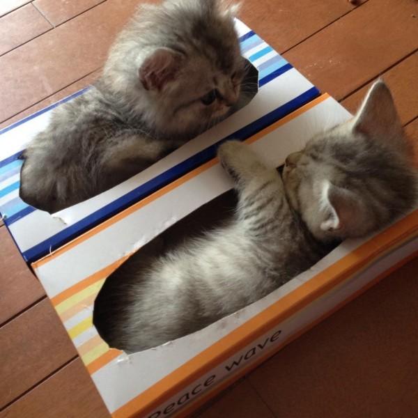 ティッシュ箱でお昼寝