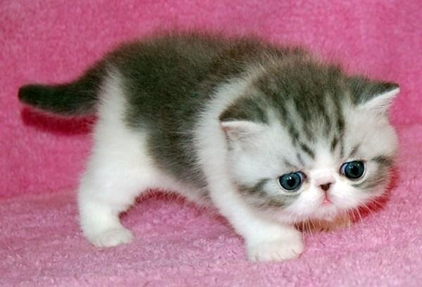 猫のよだれが出たときに注意すべきポイントとは?