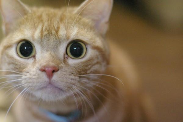 真ん丸お目目の猫ちゃん
