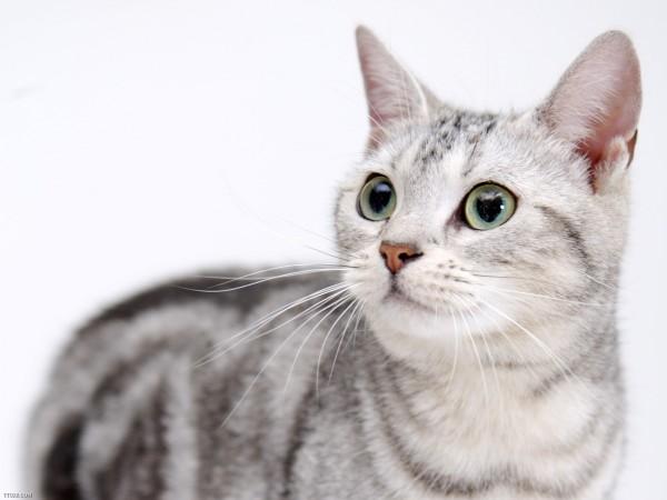 猫もマッサージが好きな理由とその方法を7つご紹介