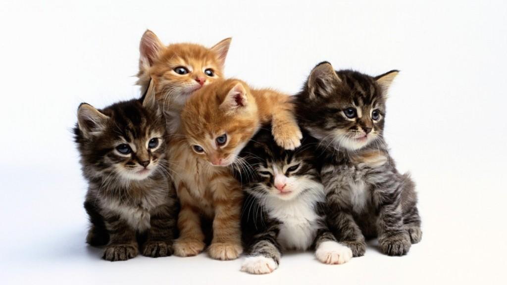 猫のくしゃみできになる病気を5つピックアップしました