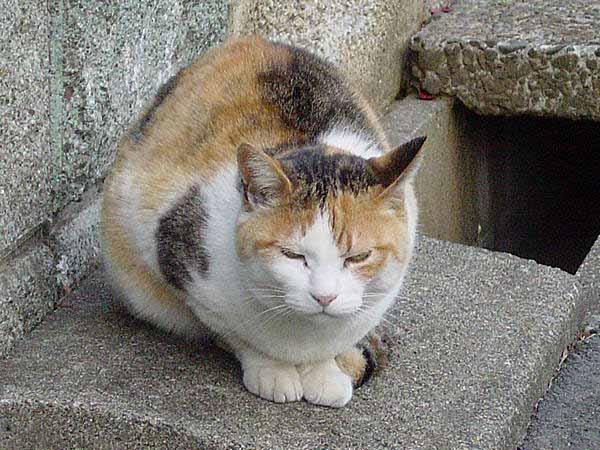 猫の吐く行為が毛玉だけではない7つの真実