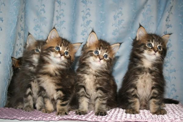 合成みたいな子猫画像