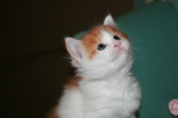 猫の目に魅せられたあなたに贈る画像11選