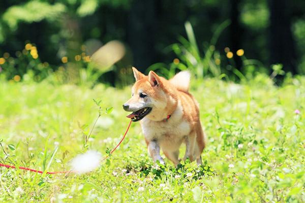 犬の名前、ヒント集☆名付けに悩むあなたへのアドバイス