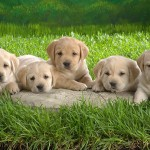 犬の名前ランキングベスト10☆ペットの名付けの参考に!