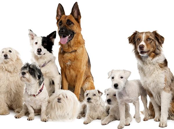 犬の名前ランキング!ペットを家族に迎える時は名付けから