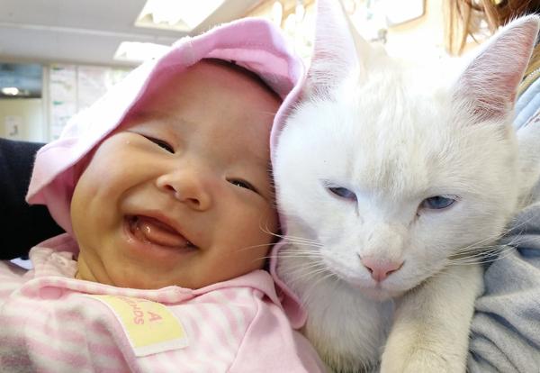 人間の赤ちゃんと猫が一緒に生活する際に気をつけたいこと