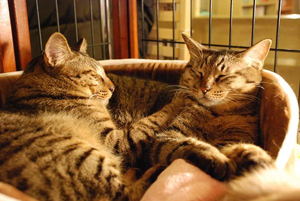 猫カフェは名古屋が人気!もふもふ猫ちゃんと触れ合うお店