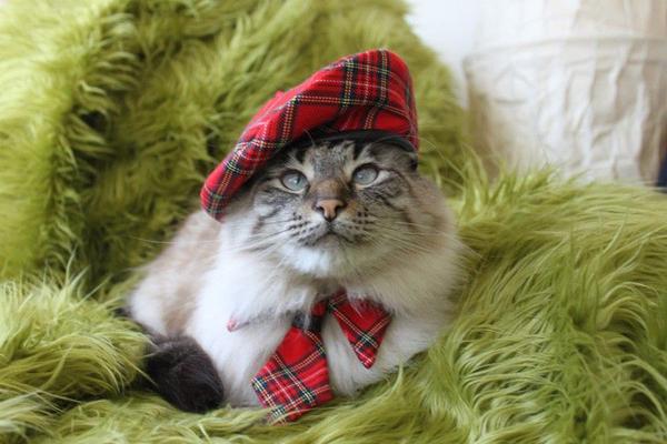 猫好きな貴方に知って欲しい!猫にまつわる雑学・豆知識