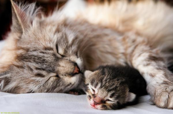 赤ちゃん猫のお世話をするなら☆注意したい7つの予備知識