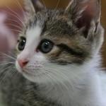 猫好きにはたまらない!癒される可愛い猫ちゃん画像12選