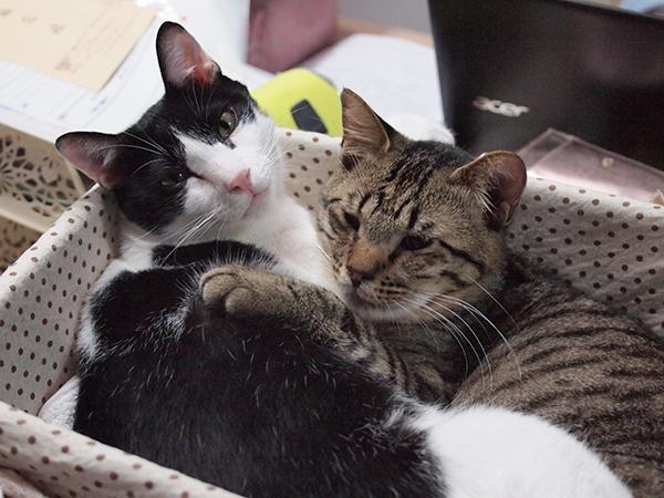 猫が発情期になったらどう対処するべき?4つのアドバイス