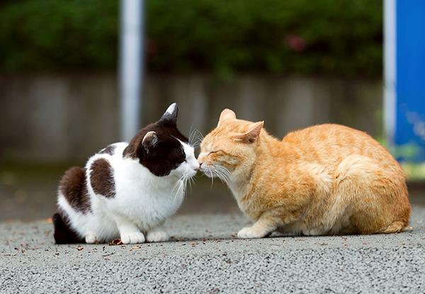 猫の発情期っていつ?ペットの行動がよくわかる豆知識