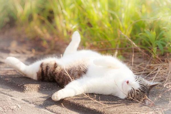 猫にまたたび☆効果や危険性を知って上手に遊ぶ4つのコツ