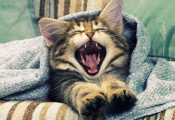 猫の鳴き声からわかる意味☆ペットの要求を読み取るコツ