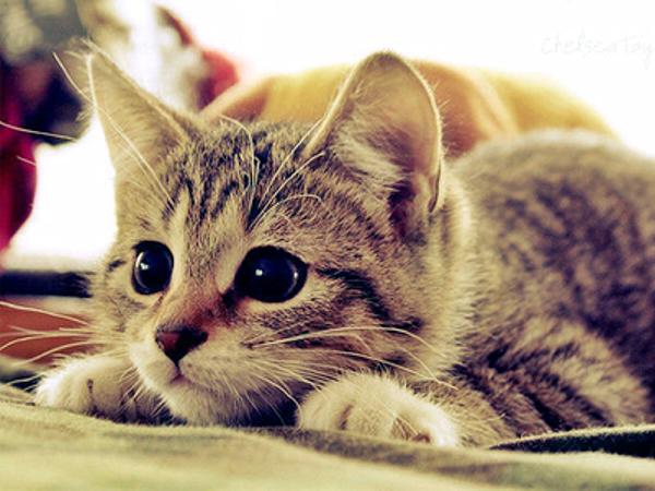 愛猫のストレスのサインに気づいて!5つの原因と対処法
