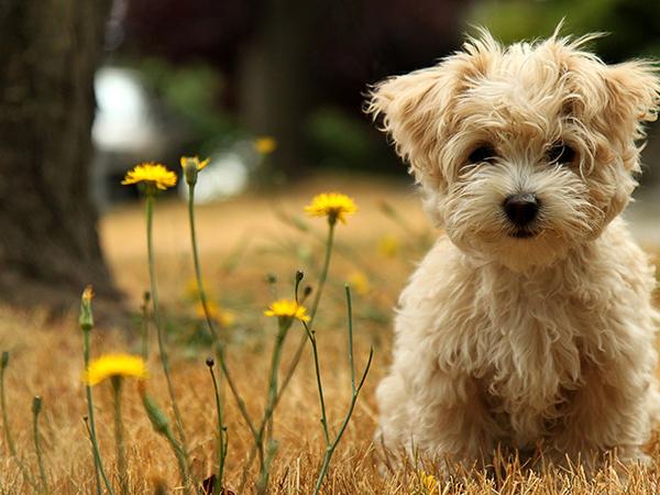 飼いやすいペット!新しい家族に最適な5種の犬たち