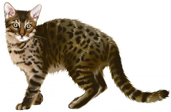 猫の年齢にあったキャットフード、その正しい与え方