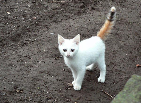 猫を飼いたいあなたへ。家族を説得させる魅力の伝え方