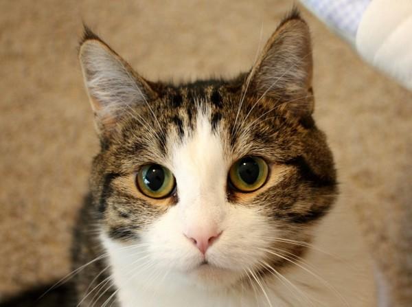 猫の年齢にあった接し方で気をつけたい5つのこと