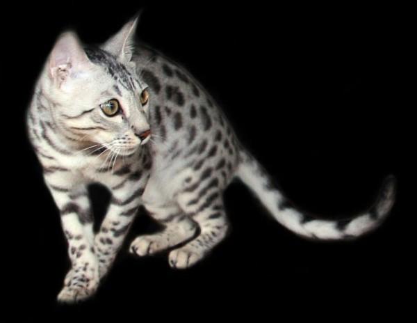 猫の動画を撮るときに絶対気を付けたい5つのこと