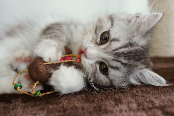 07猫おもちゃ-2